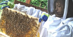 A Clonlara unschooling student works with honey bees.
